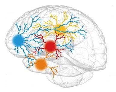 cerveau centre de l'agiité